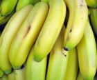can green bananas constipate?